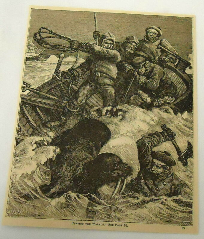 1882 magazine engraving ~ MEN HUNTING A WALRUS