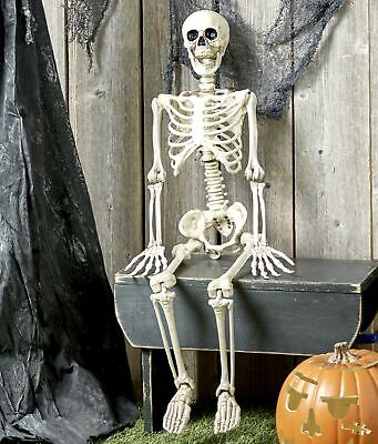 """Articulating 35"""" Halloween Skeleton with Articulating Joints for Posing"""