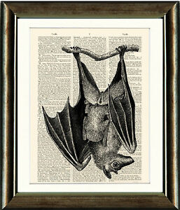Antique-Book-page-Art-Print-Beautiful-Bat-Image-Dictionary-Page-print