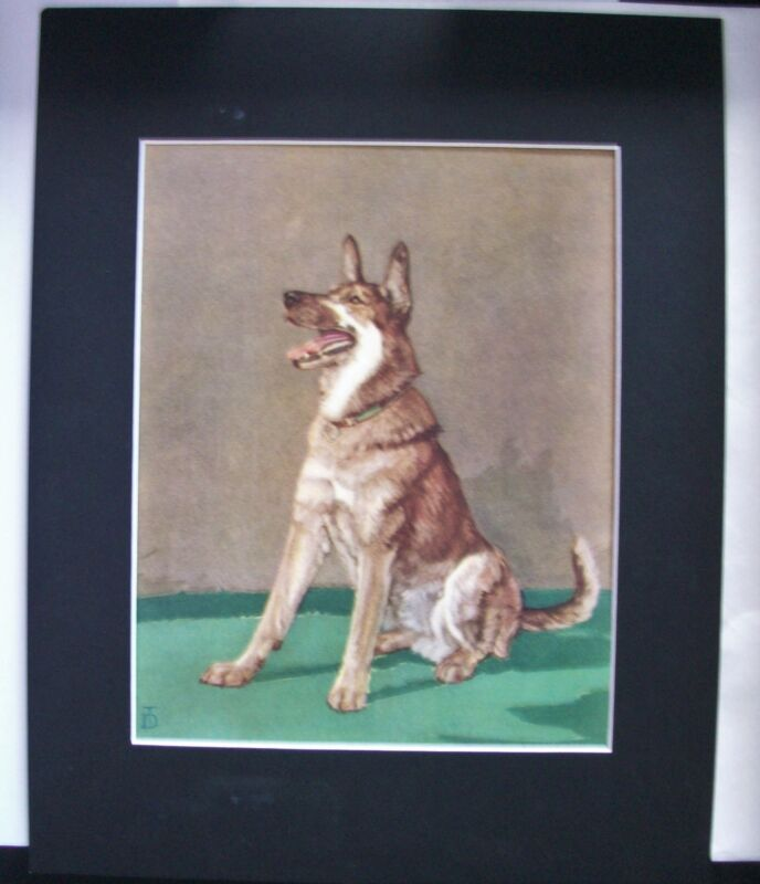 Print Diana Thorne German Shepherd Attention Police Dog Bookplate 1932 Matted
