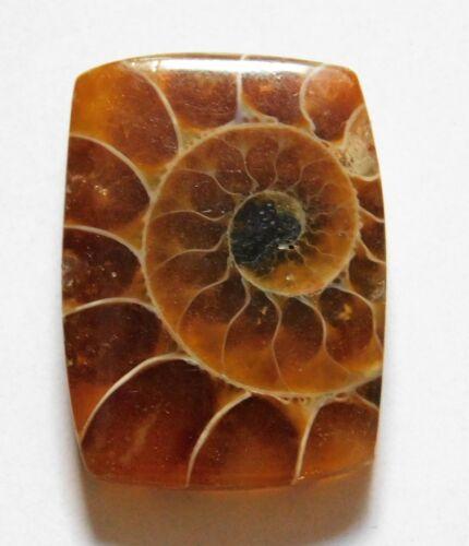 18.90 Cts Natural Ammonite Loose Cabochon Gemstone 23X17X4.5mm 29