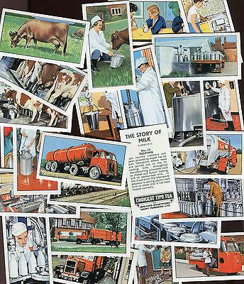 """BISHOPS STORTFORD 1966 SET OF 25 """"THE STORY OF MILK"""" TEA CARDS"""