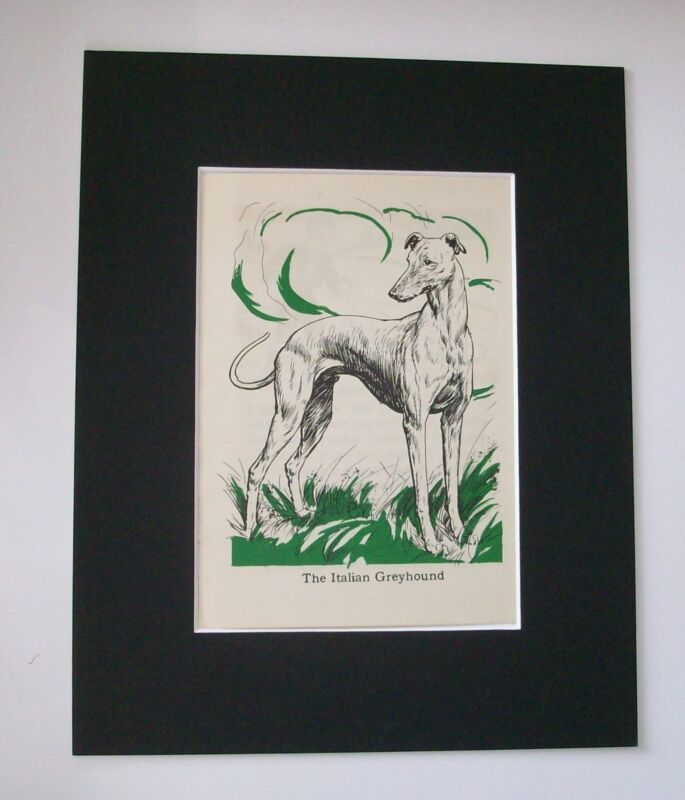 Italian Greyhound Diana Thorne Bookplate Print 1940 Matted Dog Waiting In Field