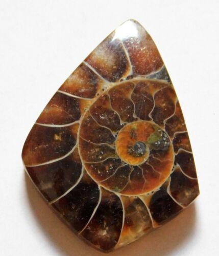 20.00 Cts Natural Ammonite Loose Cabochon Gemstone 29X21.5X4.5mm 31