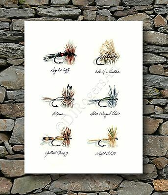 Fly Fishing Trout Prints - Fly Fishing