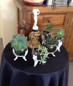 Succulents in a round glass bowls Lenah Valley Hobart City Preview