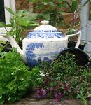 The Old Tea Pot Nursery