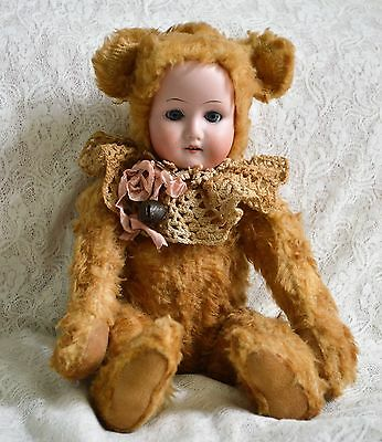 ANTIQUE MOHAIR BEAR BODY  JOINTED BISQUE HEAD BEAR 12''