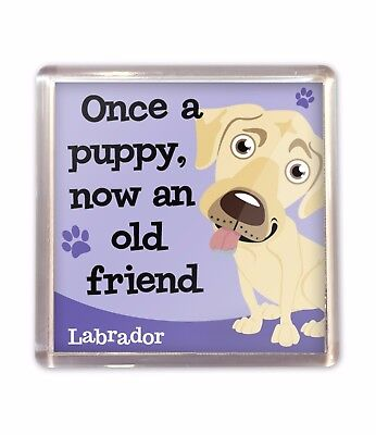 Old Rectangle Magnet (Cream Yellow Labrador Old Friend Fridge Magnet Dog Lovers Gift Stocking)