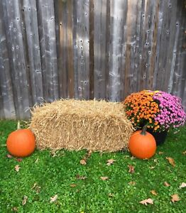 Fall/Halloween Pictures