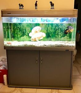 Full sale of fish tank Burwood Burwood Area Preview