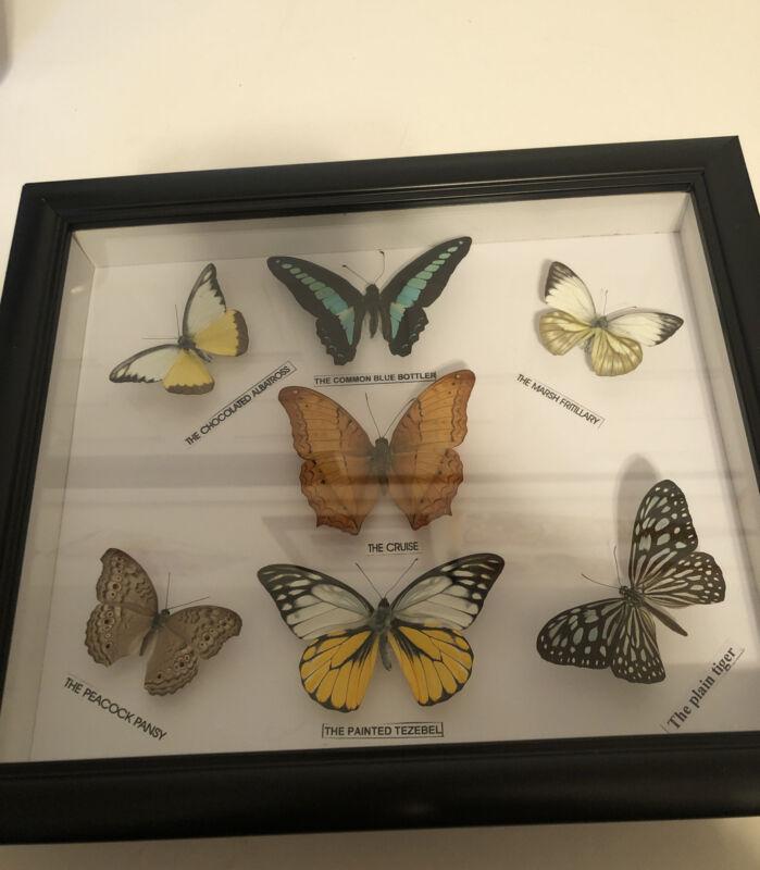 "7 real mounted butterflies framed 9 1/4"" X 11"""