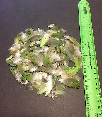 Parrot Feathers Craft Bird Feathers Fly Tye Multi Purpose Green Body Lot of 150