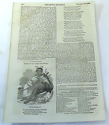 1832 magazine poem with engraving ~ SONG OF THE WILD BUSHMAN Khoikhoi Tribe