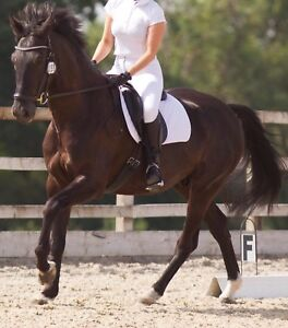 ISO Dressage Project Horse