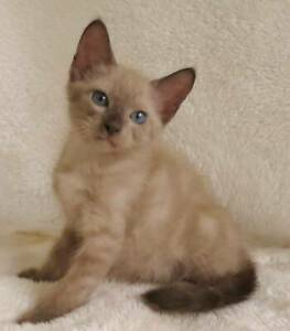 EYOLF COULD BE YOUR NEW BFF!