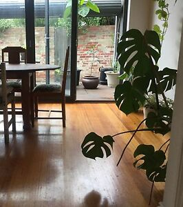 Light Filled Renovated Terrace Carlton North Carlton North Melbourne City Preview