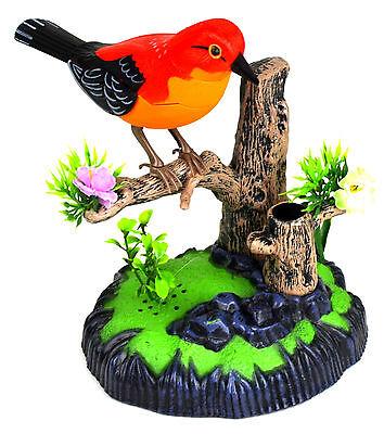 Liebevoller Vogel Zwischervogel auf Ast reagiert auf Geräusche Heartful Bird