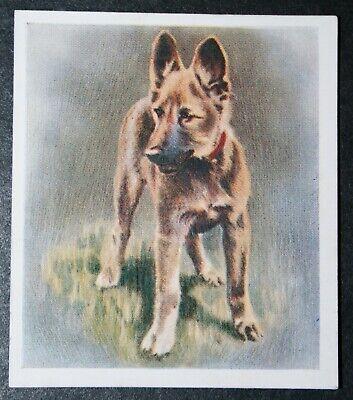ALSATIAN  GERMAN SHEPHERD  Puppy   Original 1936 Textured Colour Card   for sale  Shipping to Nigeria