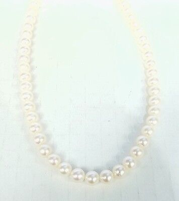 """* UNSTRUNG 16"""" STRAND OF 7 - 7 1/2MM FRESHWATER PEARLS W/ NO LOCKS"""