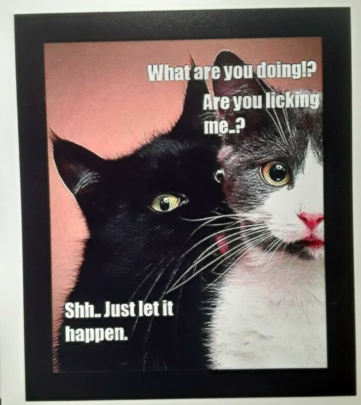 ☆ Cat Humor  ☆ Are You Licking Me ♡ Refrigerator Magnet