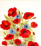Not Just Poppies