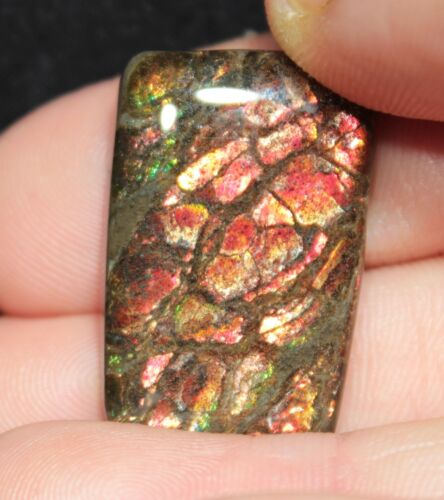 Beautiful 28.8 ct Ammolite Ammonite Cabochon from Alberta, Canada