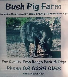 Slips and Sows for sale Collinsvale Glenorchy Area Preview