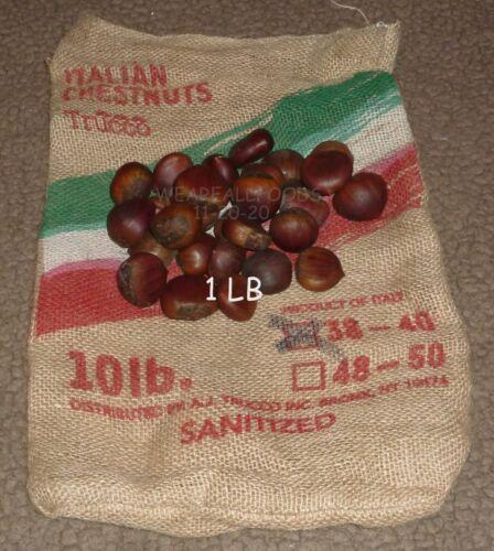 Italian Chestnuts AAA, Large, 1 LB