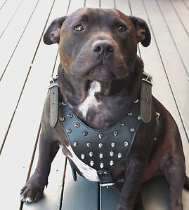 Black Leather Large Dog Studded Harness - Staffy Stud Spike XL Collar