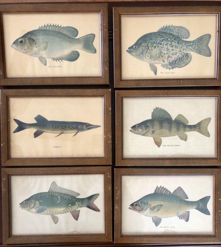 "Set Of Six Vintage Framed Fish Prints 10.5"" X 7.25"" Each"