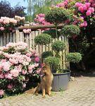 Der Pflanzenprofi aus Ostfriesland