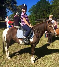 11.2 hh Paint Pony Woori Yallock Yarra Ranges Preview