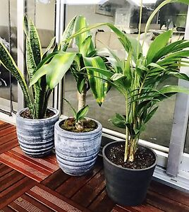 Plants Clifton Hill Yarra Area Preview
