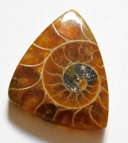 22.80 Cts Natural Ammonite Loose Cabochon Gemstone 27.5X21.5X4.5mm 25