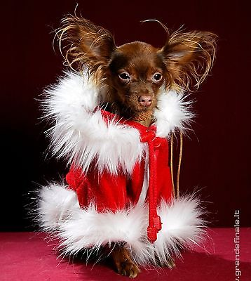 Christmas SANTA CLAUS Best Quality Dog Cat Costume Dress Your Dogs Pets As