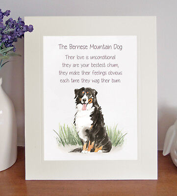 Bernese Mountain Dog BESTEST CHUM Novelty Dog Poem Fun 8 x 10 Picture/10x8 Print