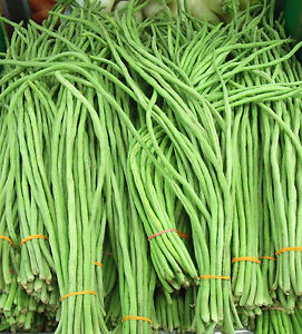 30 GREEN YARD LONG BEAN SEEDS 2018 (all non-gmo heirloom vegetable seeds!)