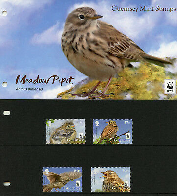 Guernsey 2017 MNH Meadow Pipit WWF 4v Set Presentation Pack Birds Stamps