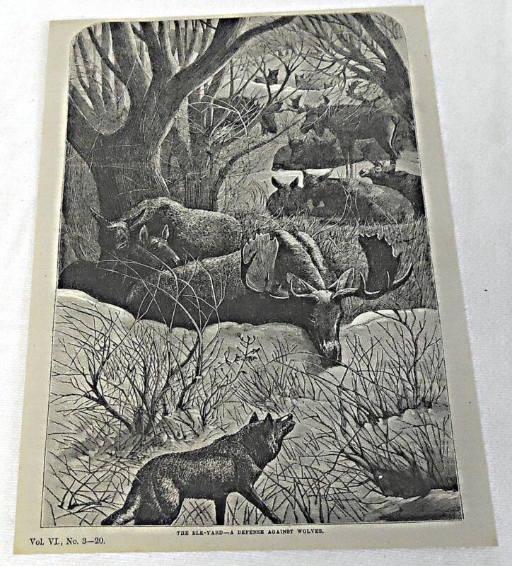 1878 magazine engraving ~ THE ELK YARD ~ defense against wolves