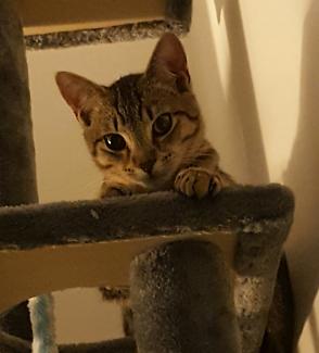 Lost 4 month old kitten