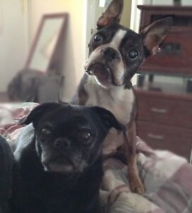 Dog sitter & (other fur babies) $15.a day