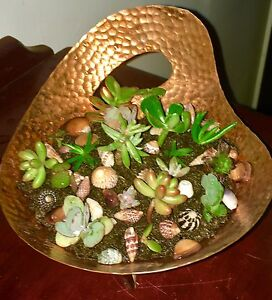 Brass pot filled with Succulents, Duck & Rope Pot Succulents Shepparton Shepparton City Preview
