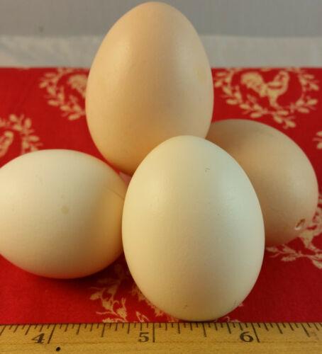 (6) Silkie - Tan Blown Eggs