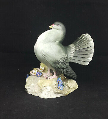 Royal Crown Derby Fan Tailed Pigeon Standing on Rock Rare - Matt - JB0049