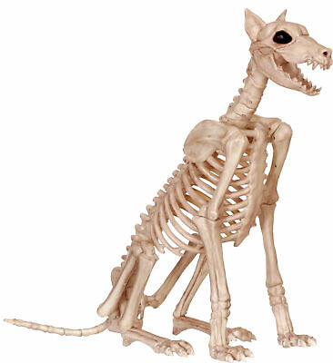 Skeleton Doberman Prop Bones Dog Plastic 29 inch Halloween Decoration