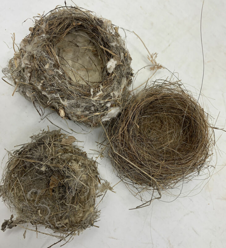 3 Rare Real Life Hummingbird Bird Nest Abandoned Cotton Horse Hair