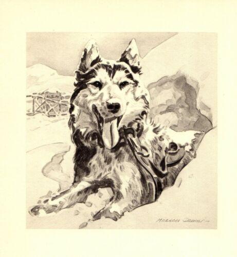1947 Antique Siberian Husky Art Print Morgan Dennis Husky Dog Art 3879f