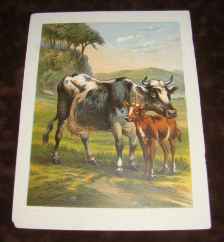 Original Antique Color Litho Book Plate Print Guernsey Milk Cow & Calf - Pasture