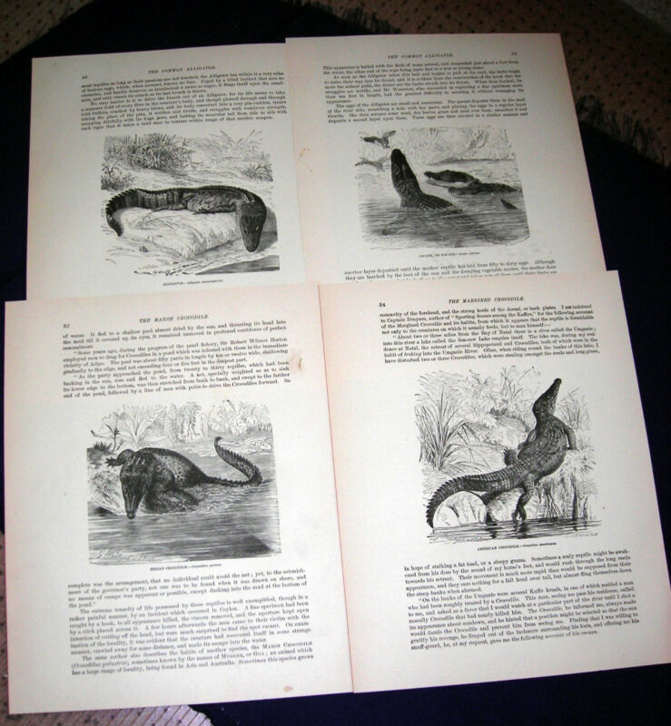 Alligators & Crocodiles - 1898 Prang Wood Engraved Prints